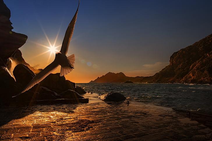 Já?, Racek, pták, seevogel, vodní pták, pobřeží, přístav