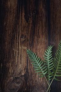 Fern, küçük eğreltiotu, Yeşil, bitki, ahşap, kahverengi, Kapat