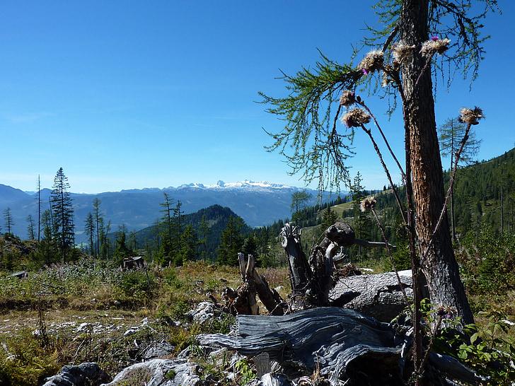 altiplà, Àustria, kitzbuehel, resistit, registre, arbre vell, morsch