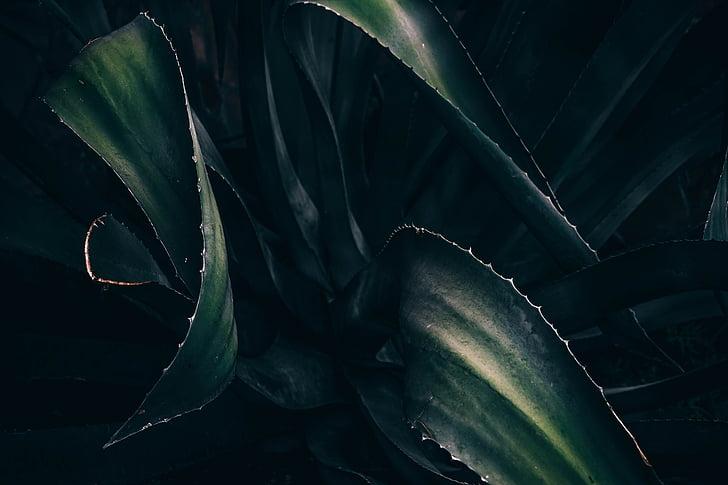 Zelená, listy, rastlín, šťavnaté, Leaf, Zelená farba, žiadni ľudia