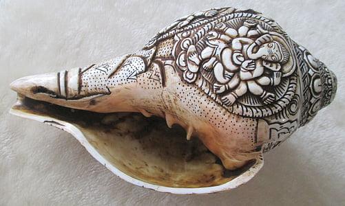 snigel, Shell, havet, snigel skal
