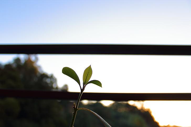 natura, verd, vida
