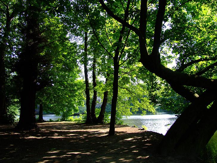 park, swan mirror, düsseldorf, idyll, rest, recovery, light