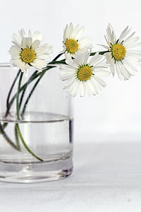 Blumen, Still-Leben, Daisy, Blumen-vase, in der Nähe, Blume, Vase