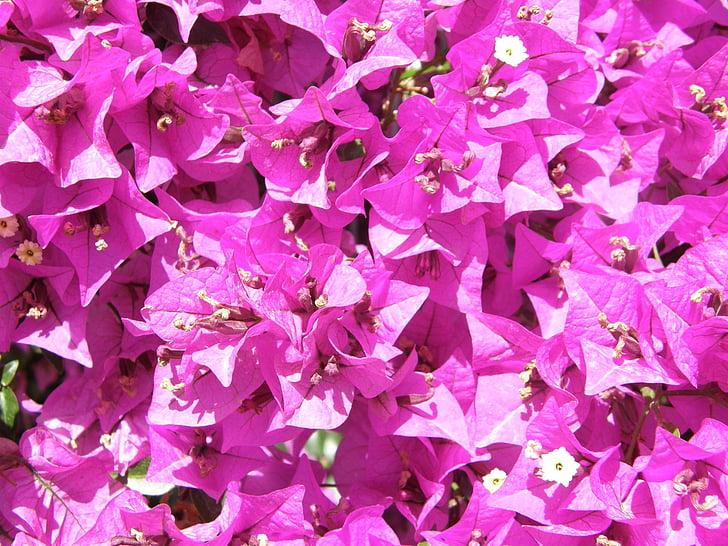 flors, flor, branca, flor, pètal, fresc, natural