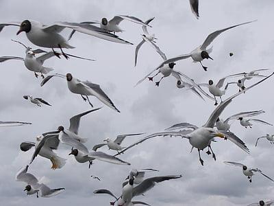rackové, ptáci, Racek, křídla, pláž, Já?