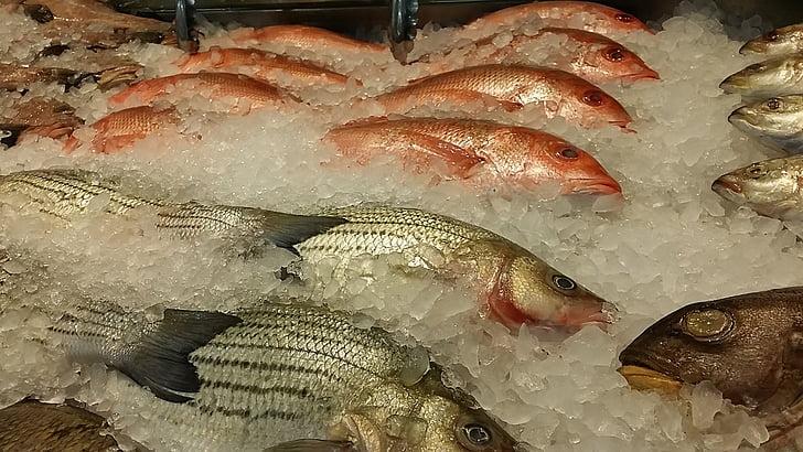 riba, svježe, hrana, plodovi mora, zdrav, sirovi, obrok