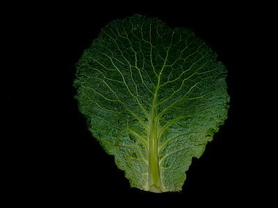 Savoia, Kohl, tardor, estofat, verdures, fulles verdes, aliments