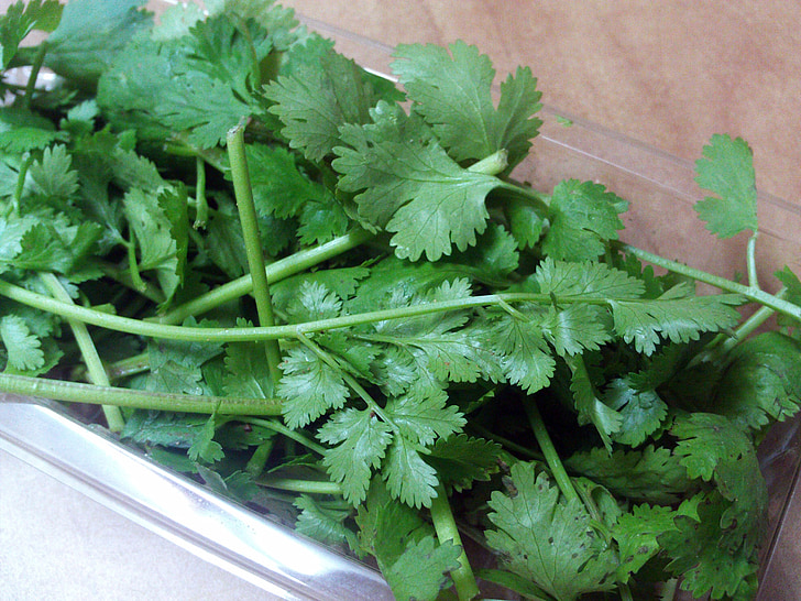 liście kolendry, aromatyczne zioła, przyprawy
