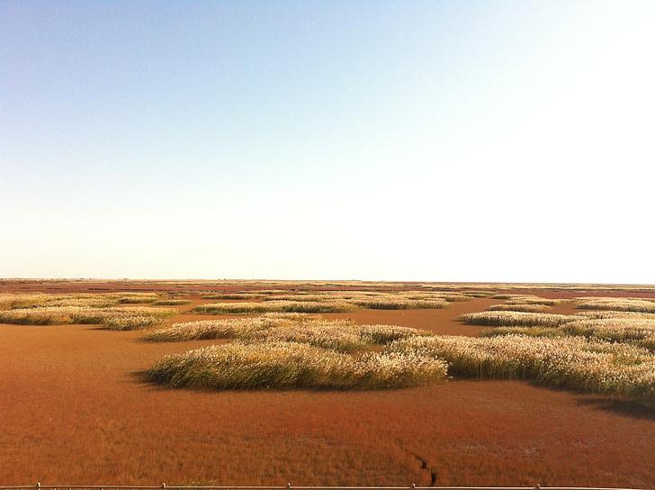 Red beach, Beach, Reed, Sea, pilvi