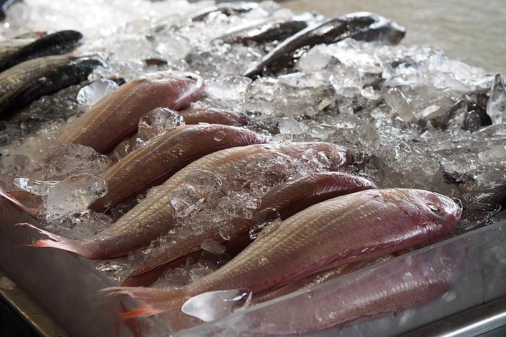 pesce, mercato, fresco, materie prime, cuoco, supermercato, cibo