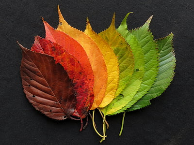 sonbahar yaprakları, sonbahar yaprakları, yaprakları, Sonbahar, Sonbahar, Renk, renkli