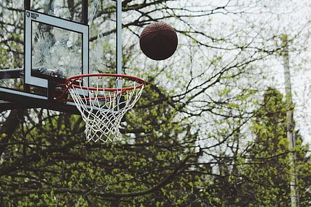 verde, árvores, planta, natureza, ao ar livre, basquete, anel