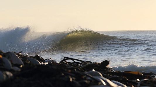 kelp, wave, atlantic, ocean, beach, scenic, south africa