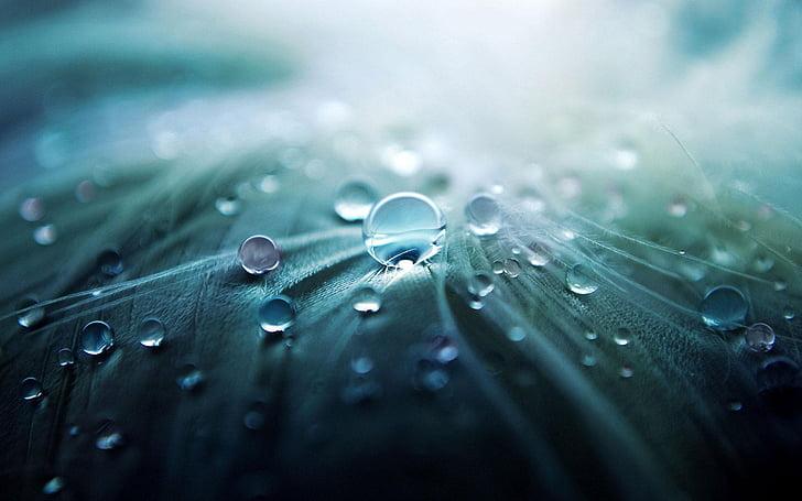 น้ำ, หล่น, หยดน้ำ, อักขระ, ฝน, ธรรมชาติ, แมโคร