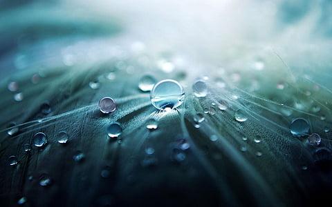 vee, tilk, tilk vett, märk, vihm, loodus, Makro