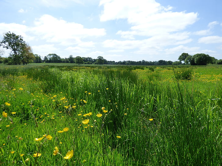 fields, prairie, green