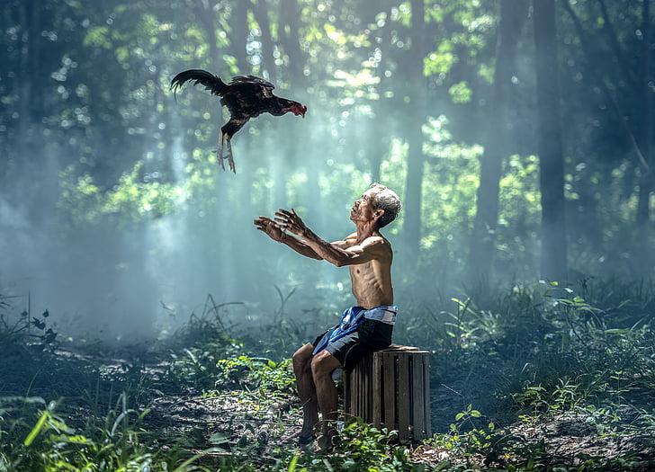 курица, Старый мужчина, птицы, Крылья, Животные, Азия, Бангкок