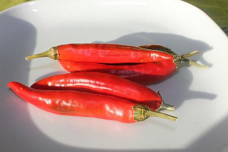 chilli, čili papričky, červená