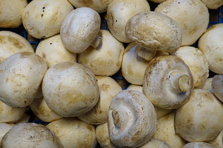 šampinjona, gljiva, kuhinje, vegetarijanska, zdrav, hrana, povrća
