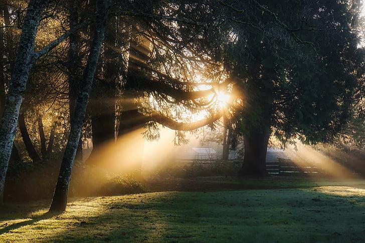 Sunrise, Daybreak, päikesevalguse, kiired, heinamaa, maastik, loodus