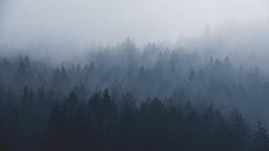 рослини, дерева, соснові, туман, Гора, ліс, Природа
