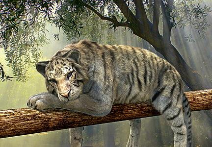 Tiger, Tier, Dschungel, Regenwald, exotische, die Welt der Tiere, Wald