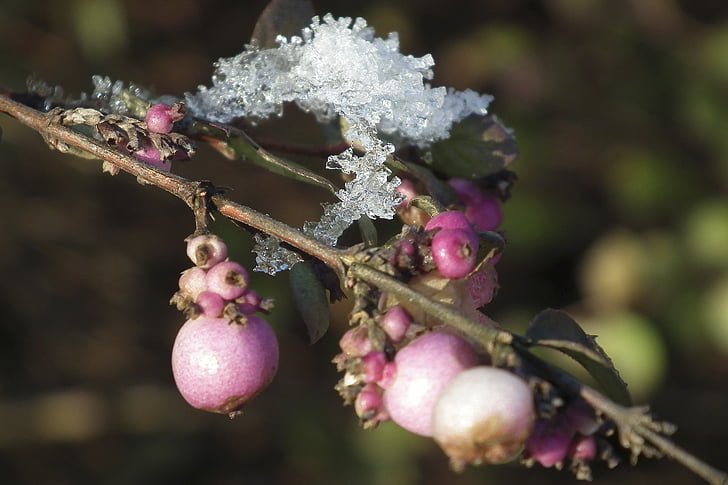 winter, ice flowers, frost, wintry, winter magic, fruit, nature