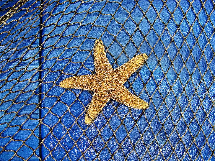 Sea star, zeedieren, zee