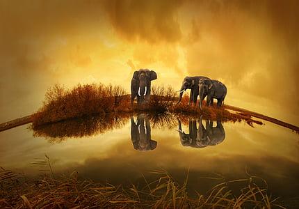 Таиланд, Слон, Закат, Природа, Животные