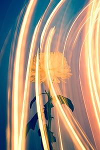 Hoa, Thiên nhiên, thực vật, ánh sáng, tóm tắt, nguồn gốc, đường cong