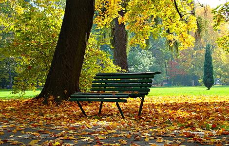 Sonbahar, Park, yeşillik, sonbahar altın, manzara, plajlara, Daralt