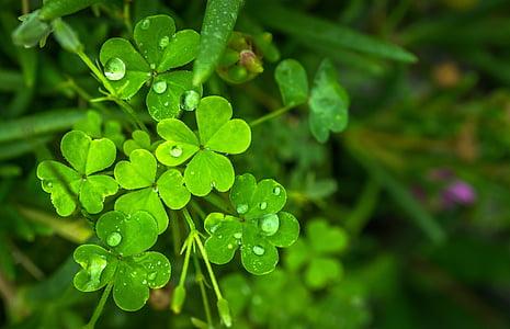 φύλλο, φύση, πράσινο, Περίληψη, φυτά, στάλα, δροσιά