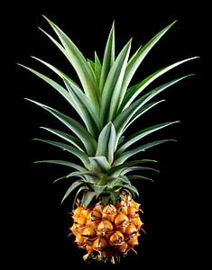 pineapple, small pineapple, fruit, tropical, delicious, food, freshness
