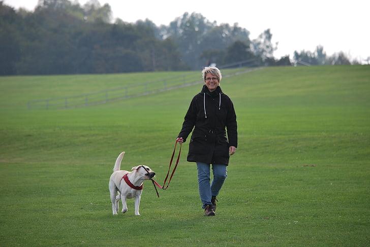 zwierząt, pies, Labrador, biały, pieszo, opiekun psa, relaks