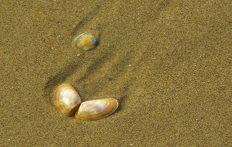 closca, tancar, Mar, sorra, l'aigua, platja, Costa