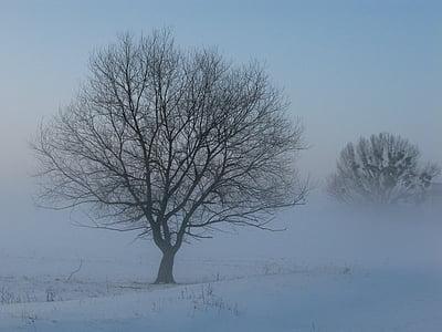 l'hivern, boira, misteriós, neu, arbre, natura, fred - temperatura