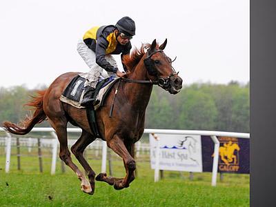 galop, cavall, esport, genet, Pista de curses de cavalls, animal, curses de cavalls