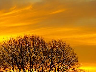 Alba, Alba d'hivern, cels, cel, arbres, morgenstimmung, posta de sol