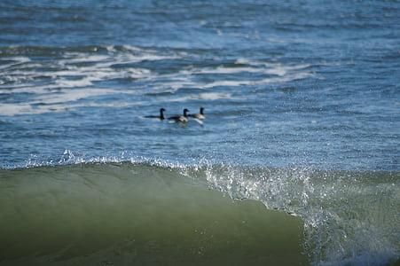 wave, ocean, sea, beach, birds, water, atlantic city