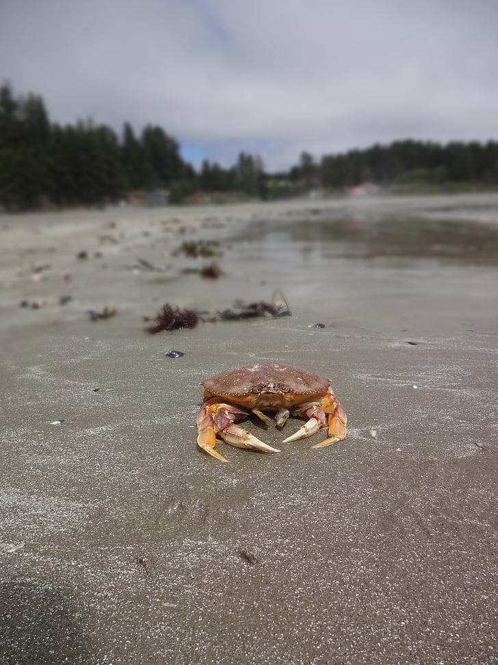 Krabi, Vaikse ookeani ääres, Vancouveri saar, Beach, mahajäetud, Vaikse ookeani, loodus