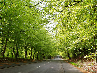 road, natural, forest, spring