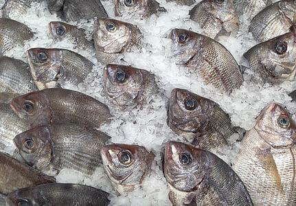 fish, sea bream, fish market, fishing