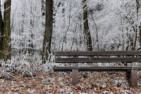 frost, winter, cold, snow, wintry, winter magic, nature