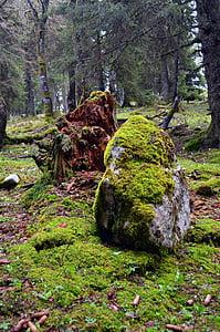 Rock, Les, podzim, pohádka lesa, mech, mystické, strom