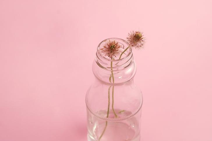 vidre, flors, decoració, disseny, floral, fresc, taula