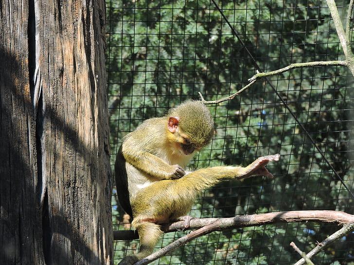 monkey, zoo, the prague zoo