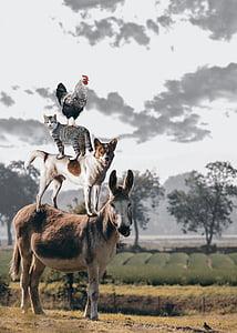 bremen town musicians, donkey, dog, cat, hahn, town musicians, bremen
