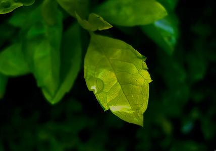 fulla, verd, fulla verda, fulles verdes, l'estiu, natura, planta