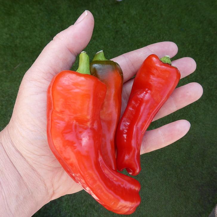 paprika, pepperoni, punane, roheline, köögiviljad, toidu